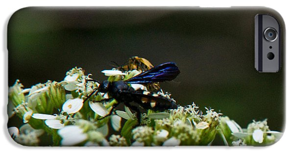 Arkansas iPhone Cases - Blue Wasp 1 iPhone Case by Douglas Barnett