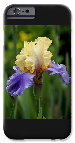 Flora iPhone Cases - Blue Yellow Iris Germanica iPhone Case by Rona Black