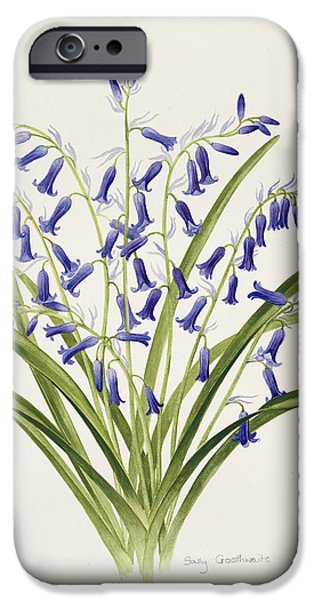 Flora Drawings iPhone Cases - Bluebells iPhone Case by Sally Crosthwaite