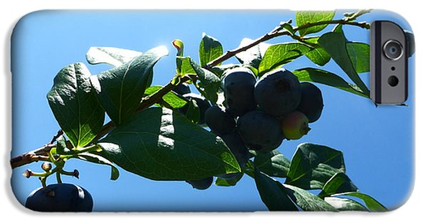 Berry iPhone Cases - Blueberries 2015 1 iPhone Case by Tina M Wenger