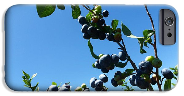 Berry iPhone Cases - Blueberries 2015 2 iPhone Case by Tina M Wenger