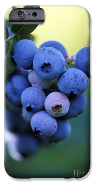 Berry iPhone Cases - Blueberries iPhone Case by George Mattei