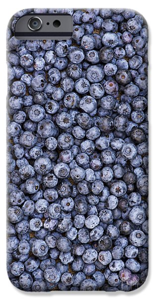 Berry iPhone Cases - Blueberry Harvest iPhone Case by Tim Gainey