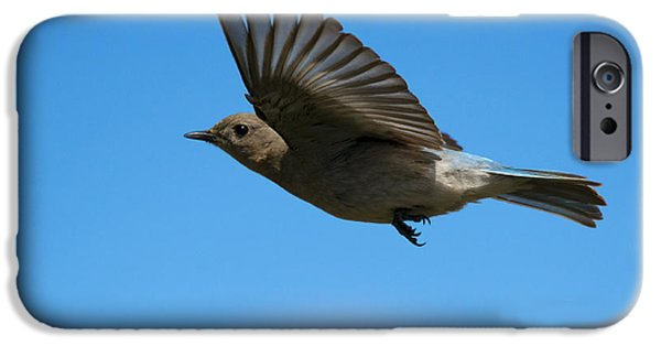 Glides iPhone Cases - Bluebird Glide iPhone Case by Mike Dawson