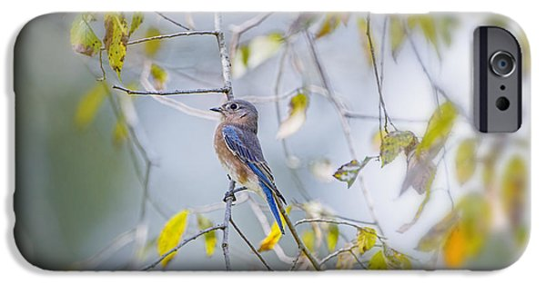 Fall iPhone Cases - Bluebird in Autumn iPhone Case by Bonnie Barry