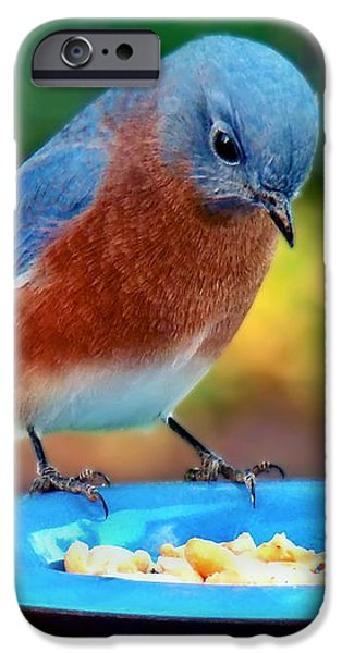Fauna iPhone Cases - Bluebirds Dinner iPhone Case by Sue Melvin