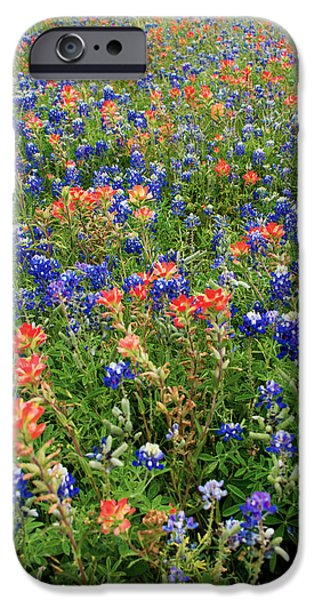 Brush Photographs iPhone Cases - Bluebonnets and Paintbrushes 3 - Texas iPhone Case by Brian Harig