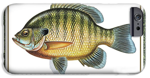 Tackle iPhone Cases - Bluegill print iPhone Case by JQ Licensing
