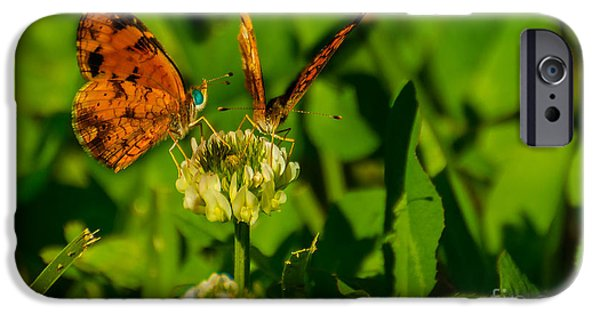 Insects Tapestries - Textiles iPhone Cases - Bluehead Butterfly iPhone Case by James Hennis