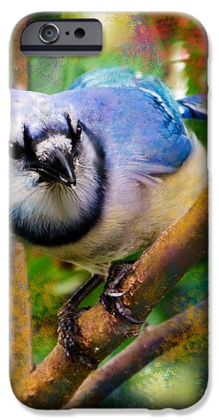 Bluejay iPhone Cases - Bluejay iPhone Case by Betty LaRue