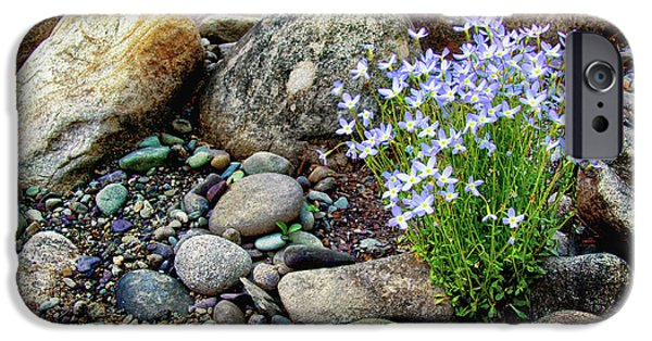 Mounds iPhone Cases - Bluets among the River Rocks iPhone Case by Carolyn Derstine