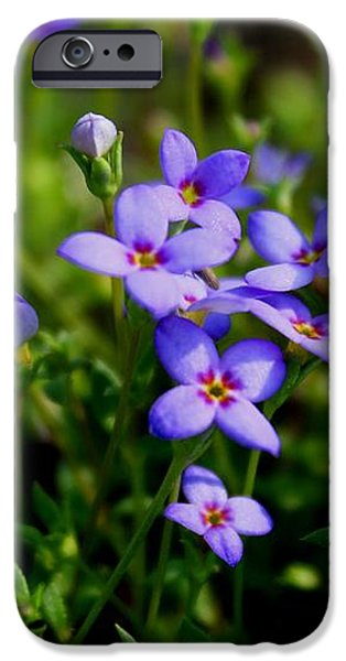 Bluets iPhone Case by Kathryn Meyer