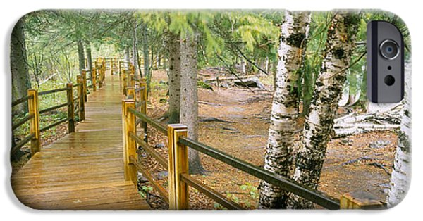 Tree Roots Photographs iPhone Cases - Boardwalk Along A River, Gooseberry iPhone Case by Panoramic Images