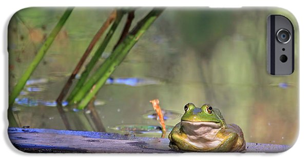 Animals Photographs iPhone Cases - Boardwalk iPhone Case by Donna Kennedy