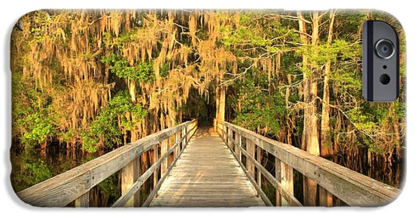 Manatee iPhone Cases - Boardwalk Through The Cypress iPhone Case by Adam Jewell