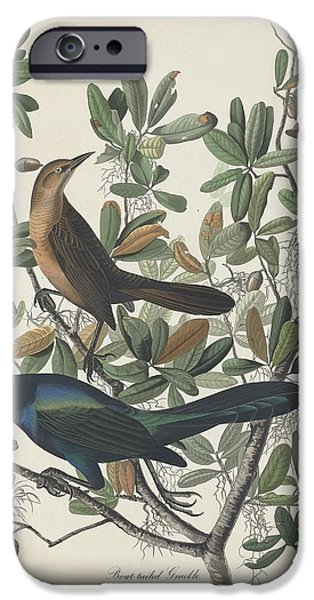 Transportation Drawings iPhone Cases - Boat-Tailed Grackle iPhone Case by John James Audubon