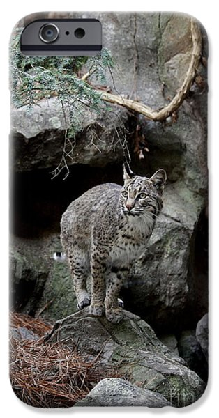 Bobcats Digital iPhone Cases - Bob Cat iPhone Case by Julian Bralley