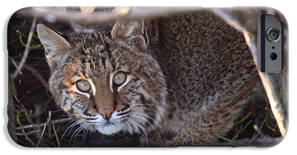 Bobcats Photographs iPhone Cases - Bobcat iPhone Case by Bruce J Robinson