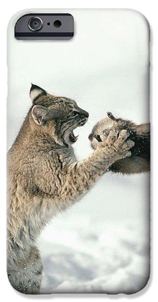 Bobcat Lynx Rufus Capturing Muskrat iPhone Case by Michael Quinton