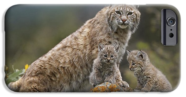 Bobcats iPhone Cases - Bobcat Mother And Kittens North America iPhone Case by Tim Fitzharris