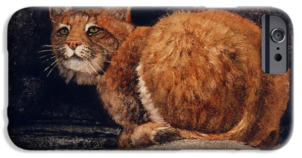 Bobcats Paintings iPhone Cases - Bobcat On Ledge iPhone Case by Frank Wilson