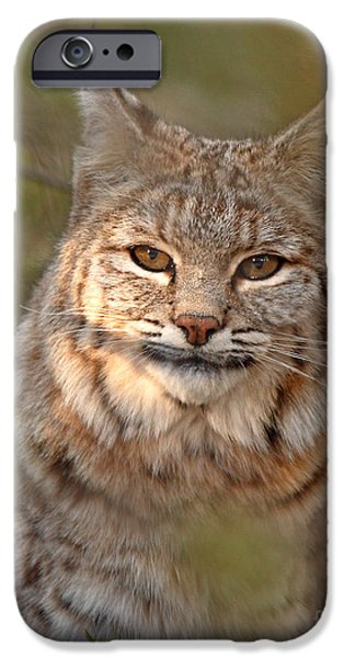 Bobcats iPhone Cases - Bobcat Portrait Surrounded By Pine iPhone Case by Max Allen