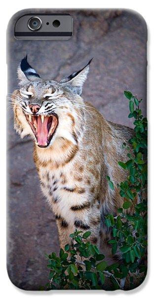 Bobcat Yawn iPhone Case by Randall Ingalls