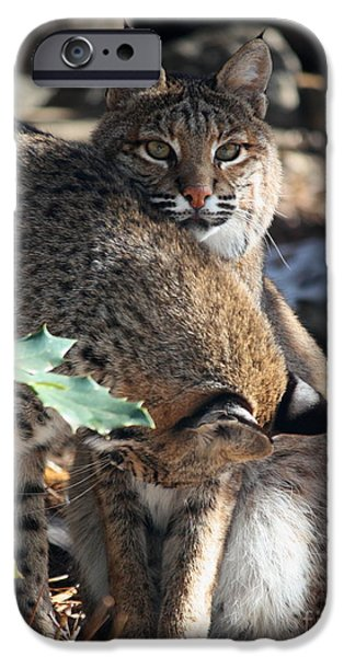 Bobcats Digital iPhone Cases - Bobcats iPhone Case by Julian Bralley