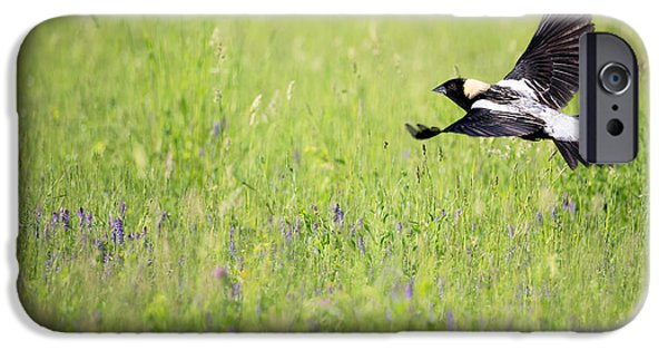 Recently Sold -  - Small iPhone Cases - Bobolink in Flight iPhone Case by Bill Wakeley