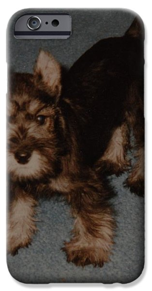 Puppies iPhone Cases - Boo Boo iPhone Case by Rob Hans