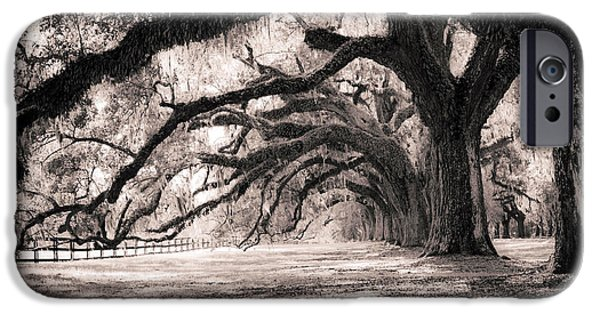 Shadow iPhone Cases - Boone Hall Plantation Live Oaks iPhone Case by Dustin K Ryan