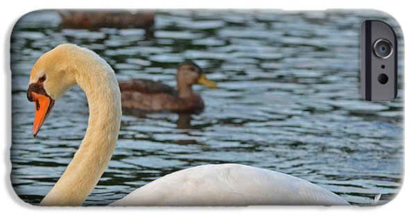 Boston Ma iPhone Cases - Boston Public Garden Swan amongst the ducks iPhone Case by Toby McGuire