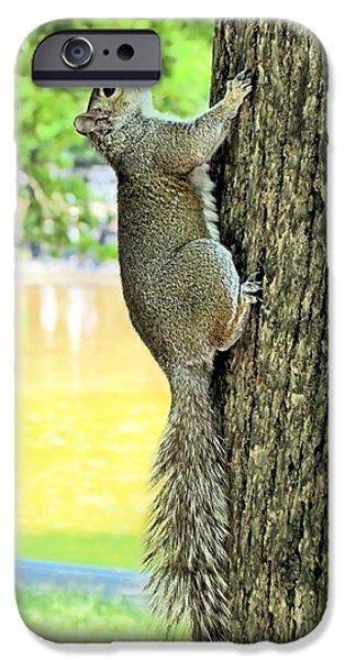 Boston iPhone Cases - Boston Squirrel iPhone Case by Elizabeth Dow