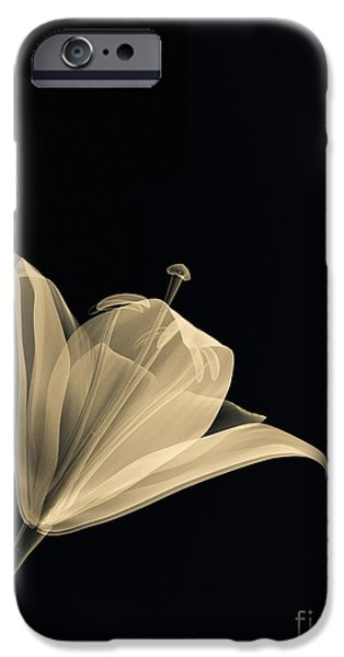 Botanical Study 3 iPhone Case by Brian Drake - Printscapes