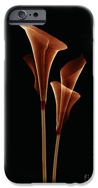 Botanical Study 5 iPhone Case by Brian Drake - Printscapes