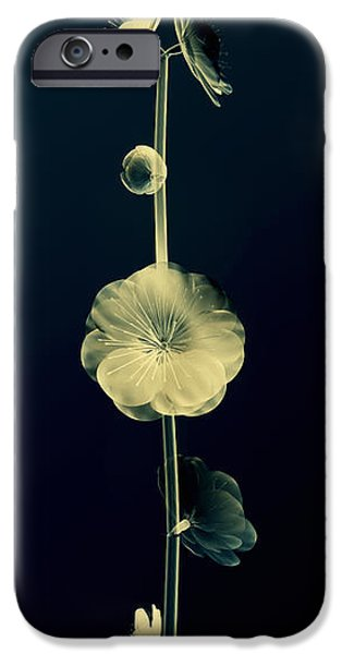 Art Medium iPhone Cases - Botanical Study 6 iPhone Case by Brian Drake - Printscapes