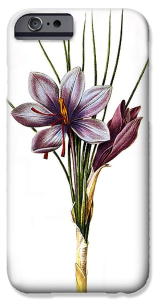 BOTANY: SAFFRON iPhone Case by Granger