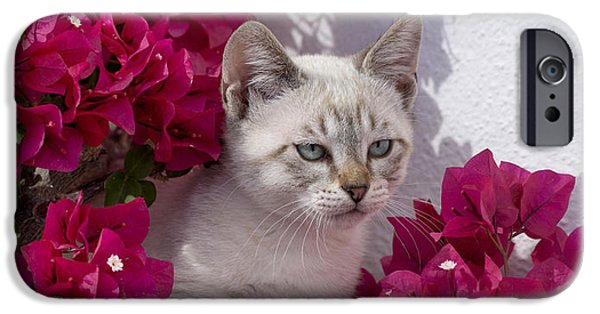 Recently Sold -  - Young iPhone Cases - Bougainvillaea Kitten iPhone Case by MikeHoward Photography