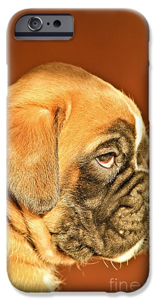 Dog Close-up iPhone Cases - Boxer Dog Puppy iPhone Case by Dan Radi