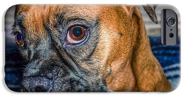 Boxer Digital Art iPhone Cases - Boxer Portrait iPhone Case by Rob Sellers