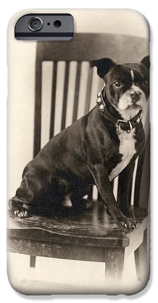 One Animal iPhone Cases - Boxer Sitting on a Chair iPhone Case by Unknown