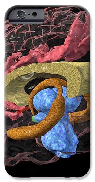 Brain Limbic System, 3-d Mri Scan iPhone Case by Arthur Togaucla