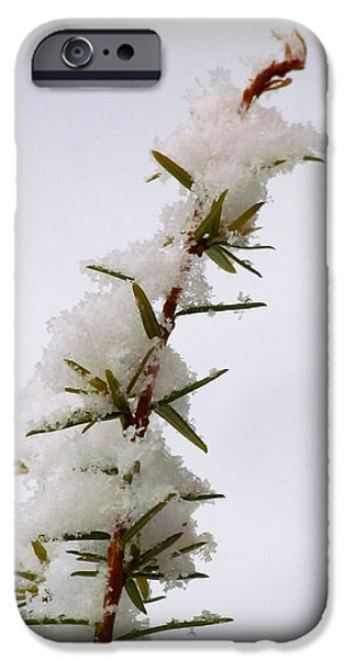 Drifting Snow Photographs iPhone Cases - Branching Out in the Snow iPhone Case by Lori Pessin Lafargue