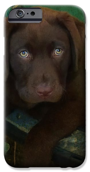 Dogs iPhone Cases - Bright Eyes iPhone Case by Larry Marshall