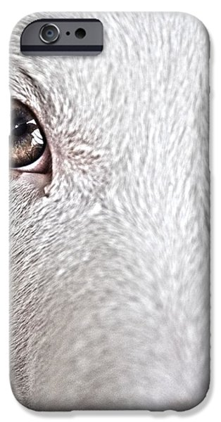 Puppies iPhone Cases - Bright Eyes of a Pup iPhone Case by William Suntken