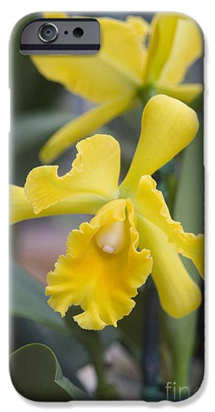 Bright yellow cattleya orchid iPhone Case by Allan Seiden - Printscapes