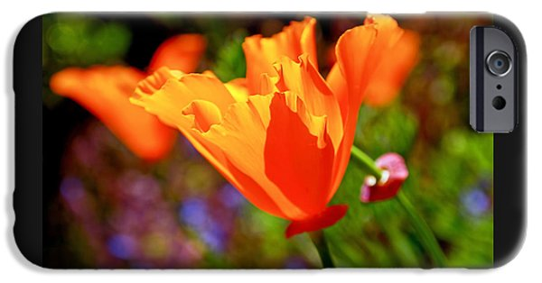 Botanical Photographs iPhone Cases - Brilliant Spring Poppies iPhone Case by Rona Black