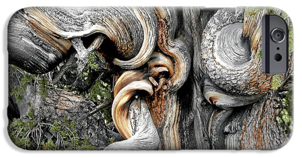 Christine Till iPhone Cases - Bristlecone Pine - I am not part of history - history is part of me iPhone Case by Christine Till