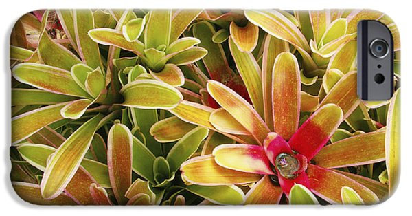 Bromeliad iPhone Cases - Bromeliad Brightness iPhone Case by Ron Dahlquist - Printscapes
