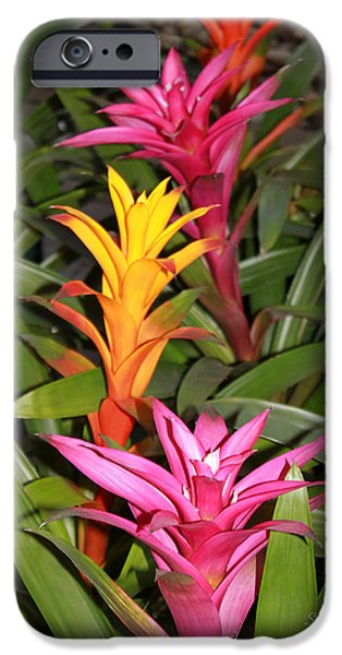 Bromeliad iPhone Cases - Bromeliad Tree iPhone Case by Suzanne Gaff